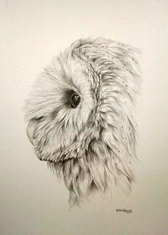"Barn owl pencil drawing 12x9"""