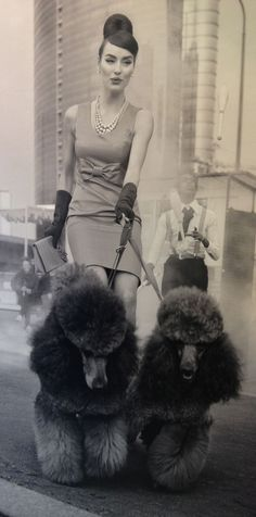 Fashionable woman walking Italian poodles WOW all the way around! What do you think?