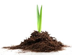 Where To Get Soil for Your Feng Shui Wealth Vase