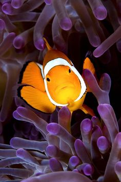 the-absolute-best-photography: llbwwb: Nemo by Carlo Depaulis