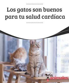 Los #gatos son buenos para tu salud #cardíaca  El corazón es el mayor músculo de nuestro cuerpo. Es el que mueve motivos, #sentimientos, y ganas de vivir. Mantenerlo sano es esencial para tener una vida saludable y llena de felicidad, dentro de lo que las #circunstancias nos permitan.