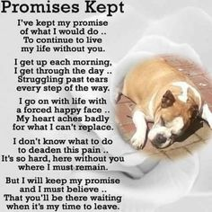 Grief Meme on Dog Loss - Miss my dog so much. Pet Loss Grief, Loss Of Dog, Animal Quotes, Dog Quotes, Horse Quotes, I Love Dogs, Puppy Love, Pet Poems, Miss My Dog