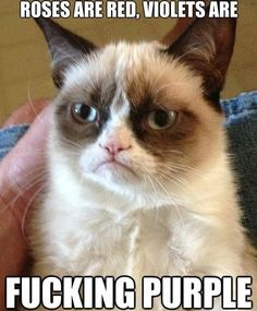 MEME - Grumpy Cats Poem