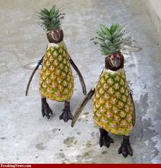 I think these pineapple penguins would love Expression Pineapple & Mangosteen as much as I do! Penguin Life, Penguin Party, Happy Penguin, Penguin Craft, Pineapple Pictures, All About Penguins, Baby Penguins, Food Art, Fur Babies