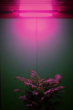 Neon // Ondas Tropicais