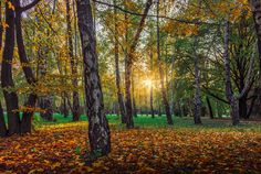 Slovakia, Nitra: Gone Too Soon Like A Shooting Star, Gone Too Soon, Hdr, Landscape Photography, Earth, Fine Art, Places, Wordpress, Trees
