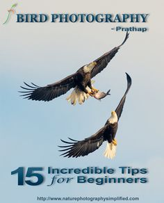 DSLR Basics: 8 Easy Steps to Learn Manual Mode for Canon DSLR Cameras   Nature Photography SimplifiedNature Photography Simplified