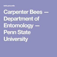 Carpenter Bees — Department of Entomology — Penn State University Carpenter Bee, Pest Management, State University, Language, Bug Control, Bees, Life Hacks, Backyard, Gardening