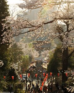 Sun setting at Ueno Park, Tokyo. See more photos from my visit to Ueno Park at full sakura bloom: http://mithunonthe.net/2016/06/17/japan-2015-cherry-blossoms-full-bloom-ueno-park/