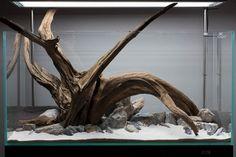 "Equipment: Cade 1200 Cade x4 54w T5HO lighting Eheim Pro Eheim Jager 300w  Hardscape: Black Earth Premium ""normal"" White sand Blue stone Mal..."