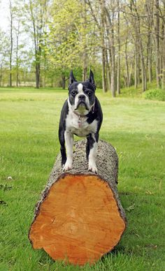 No Dog Park? No Problem! Here Are Some Creative Ways to Cope   Dogster