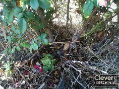 CleverHides.com: - Tree/Stump Hides