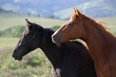 Watchin' horses on the prairie fine art by NaturePhotosMontana, $26.50