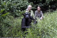 Watch Wounda the chimpanzee hug Jane Goodall after being released into the wildAfter being brought back from the brink of death by the Jane Goodall Institute, Wounda the chimpanzee makes a simple gesture of thanks that will melt your heart. http://www.mnn.com/earth-matters/animals/blogs/watch-wounda-the-chimpanzee-hug-jane-goodall-after-being-released-into