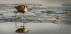 dusk and dawn – Bruna Photography Dusk Till Dawn, Bird, Photography, Animals, Photograph, Animales, Animaux, Birds, Fotografie