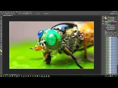 How To Do Focus Stacking in Photoshop - YouTube