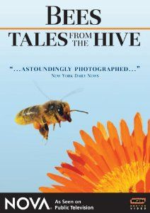 "NOVA: Bees - Tales From the Hive: Nova, Wolfgang Thaler, Herbert Habersack: Introduction shows worker bees defending the hive in a suicide act (as their stinger pulls out). Workers search for nectar; close-ups show them sucking nectar from flowers. Pollen collects on hairs and is then stored on pollen sacs on the legs.  - ""Closeup photography throughout the VIDEO is exceptional."""