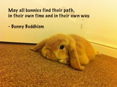 Why Buddhism? - a beautiful post by the author of BUNNY BUDDHISM. For anyone who loves bunnies and/or Buddhism or struggles with depression and anxiety (don't we all?)