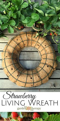 How to make and care for a living strawberry wreath that will produce berries for years.