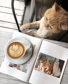Blue Aesthetic Pastel, Miss Kitty, Best Coffee Shop, Coffee Is Life, Coffee And Books, Instagram Story Ideas, Coffee Humor, Pet Care, Pet Adoption