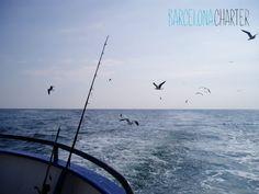 Una Caña de pescar para cada ocasión Seguramente, tienes pensado realizar un alquiler de barcos para este verano y de paso aprovechar para pescar en Barcelona. Bien, pues antes deberías conocer los diferentes tipos de cañas de pescar y saber cual de ellas se adapta más a tus necesidades.  http://www.barcelonacharter.net/ #Caña   #Pesca   #Barcelona   #alquilar   #barcos   #navegar   #disfrutar   #técnicas   #trucos
