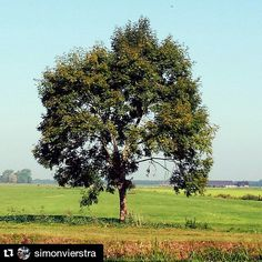 Boom bij Bussum Typical Dutch landscape with tree #boom #tree #Dutch #Holland #Nederland #landschap #Bussum