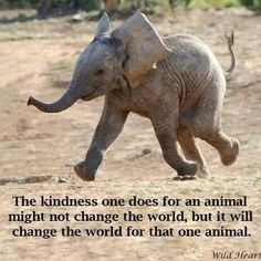 Show kindness to animals