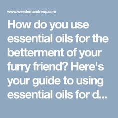 How do you use essential oils for the betterment of your furry friend? Here's your guide to using essential oils for dogs safely & affordably. http://www.weedemandreap.com/essential-oils-dogs/