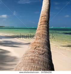 Heart cutted on palm tree on caribbean beach, Dominican Republic  - stock photo