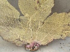 Read description /14 x 10 Inches Yellow Sea Fan/Nautical Theme/ Wedding Decor/Gorgonia Coral/ Craft Supply/Gorgonia Coral by DaisyAndMomSupply on Etsy