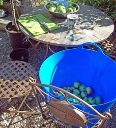 Storing home-grown apples Growing Vegetables, Fruits And Vegetables, Water Shoot, Apples, Posts, Blog, Messages, Fruits And Veggies, Backyard Farming