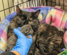 An abandoned cat who had to give birth in frigid temperatures did whatever she could to save her kittens.