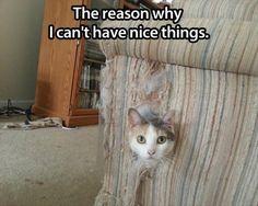 Random Funny Pictures – 57 Pics