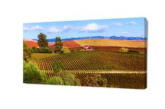 Autumn Wine Country, Napa Valley Vineyard Vista Photo, California Photo, Colorful Wine Country Canvas Decor, Country Charm Office Wall Art