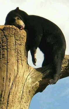 stress Free zone for animals lover  a tired bear