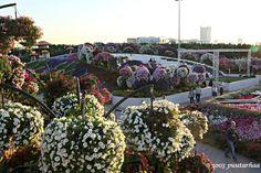 Dubai Miracle Garden – osa II | 1003 puutarhaa - 1003 gardens