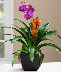 Exotic Orchid Garden for Mom and other flowers & plants at ProPlants.com