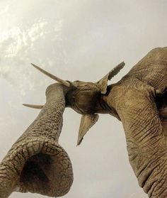 23 pictures proving that the right angle is everything - Tiere Elephants Never Forget, Save The Elephants, Elephant Photography, Animal Photography, Wildlife Photography, Animals And Pets, Funny Animals, Cute Animals, Wild Animals
