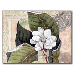 Vintage Botanical Collage with Magnolia Post Card