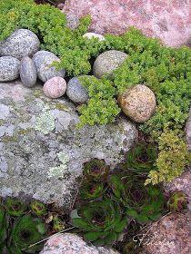 Rock Garden Plants, Garden Pool, Forest Garden, Woodland Garden, Outdoor Projects, Garden Projects, Outdoor Decor, Garden On A Hill, Dream Garden