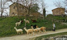 Weekend in Alta Umbria tra borghi e piatti tipici | itinerario in Valtiberina Horses, Animals, Italia, Animales, Animaux, Animal, Animais, Horse