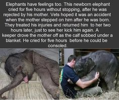 Awwwwwww, this makes me sooooo sad! I can relate to you, little elephant. If I could I would comfort you myself! Poor baby.....