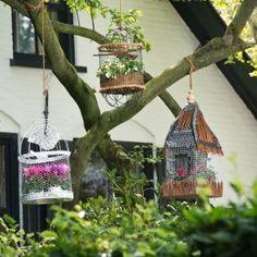 Vogelkooitjes zijn omgetoverd tot vrolijke plantenhangers in Landleven 6, 2014.