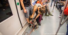 Viajar en el metro Bilbao con nuestros perros FIRMA Y COMPARTE ESTA PETICIÓN AHORA!