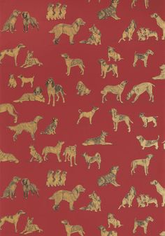 Best Friend #wallpaper in #red with #metallic #gold from the Menswear Resource collection. #Thibaut