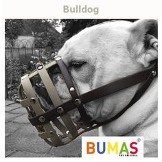 Buy the best custom-made dog muzzle from BUMAS. A custom muzzle is the best muzzle for your canine or beloved pet. These colourful and comfortable best fit muzzles are made from BioThane - original BUMAS are animal welfare certificated. Every Dog Breed, Dog Muzzle, Dog Breeds, Horses, Pets, Animals, Animais, Animales, Animaux