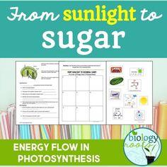 23 Laminated Photosynthesis Flashcards.