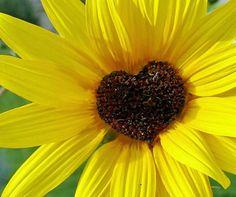 Yellow Flower Heart