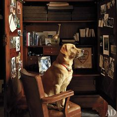 Dogs and Cats in AD Photos | Architectural Digest