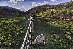 Liberty by Beniamin Sabo on Liberty, Horses, Landscape, Animals, Political Freedom, Scenery, Animales, Animaux, Freedom